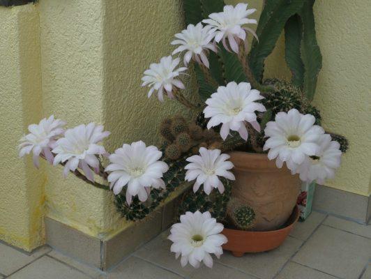11.5. / Sepp, nun ist sie da, die Blütenexplosion