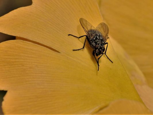 8.11. Wisy / Fliege tankt auf Gingko!