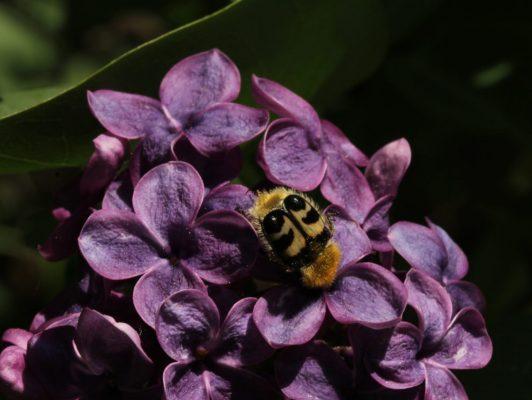24.4. / Ingrid, Besuch im Garten