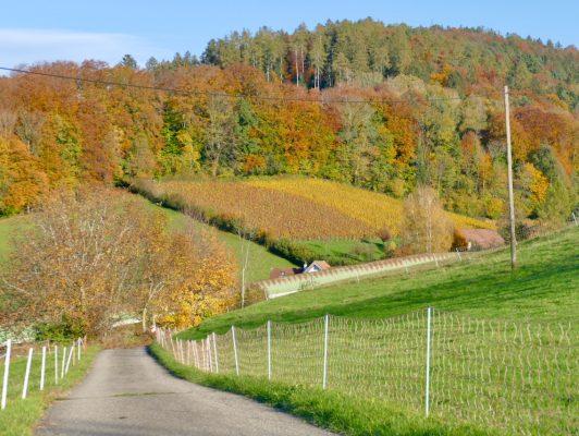 3.11. Sepp / Buechberg in den schönsten Herbstfarben