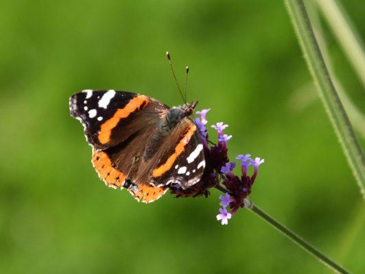 25.10. Heidi / der Schmetterling geniesst den schönen Herbsttag