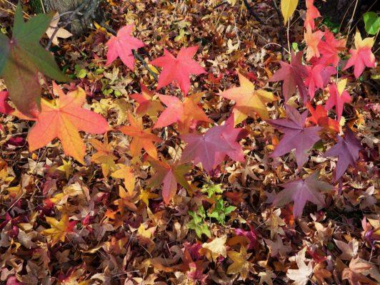 8.11. Wisy / fantastischer Herbst